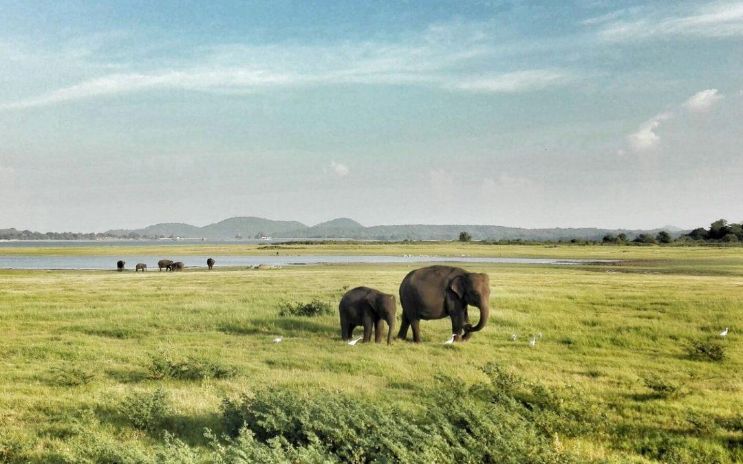 Sri  Lanka  de cine