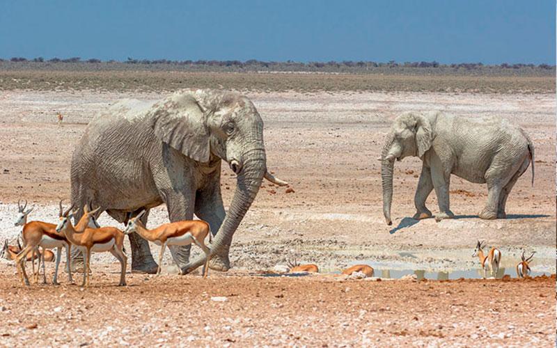 Viajar solo, en grupo Namibia