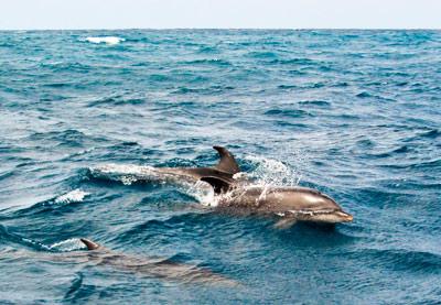 delfines-en-zanzibar