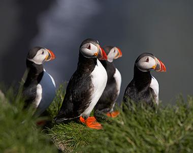 Avistamiento de animales Islandia