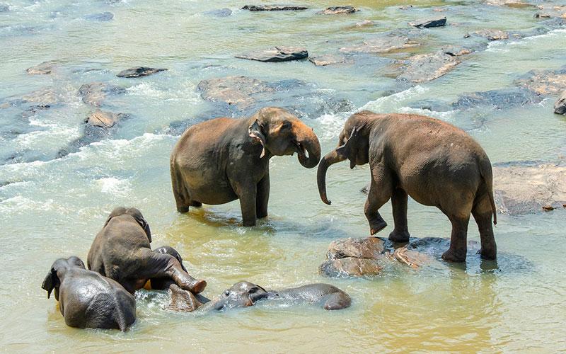 Tanzania Parque Tarangire elephant-4032274_1920