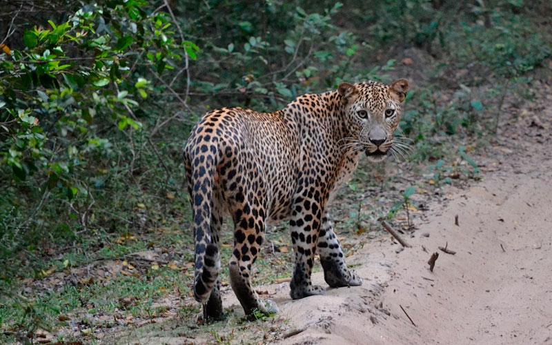 Tanzania serengeti leones