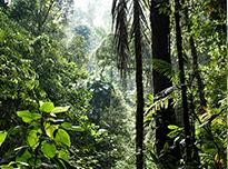 Convivencia con etnias locales en Costa Rica
