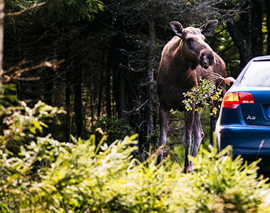 Viajes Road Trip en Suecia