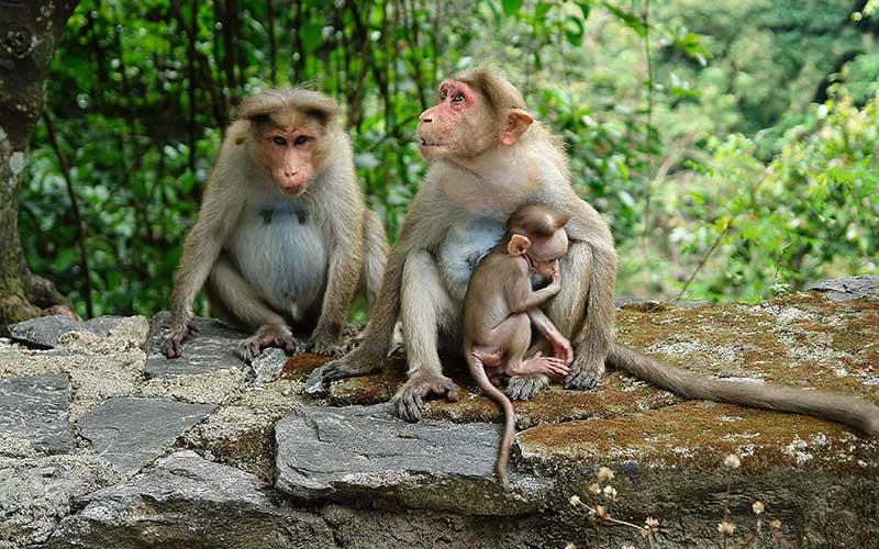 Viaje en familia a India