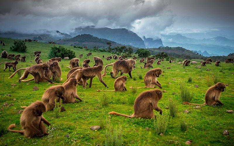 Avistamiento de animales Etiopía