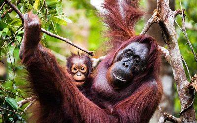 Destinos exóticos de vida animal en Asia